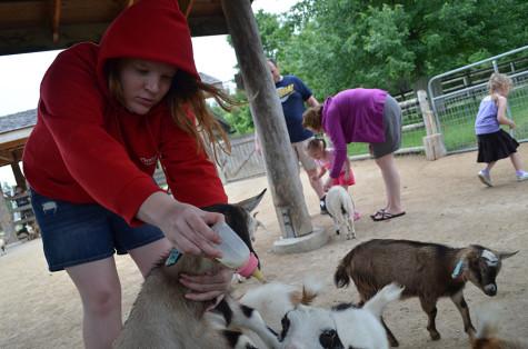 Got Goats?