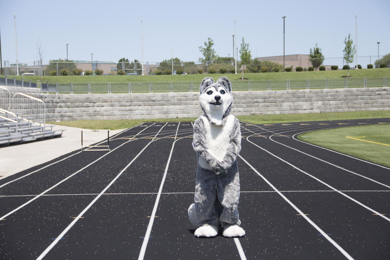 Chamberlain poses in the full husky mascot outfit.