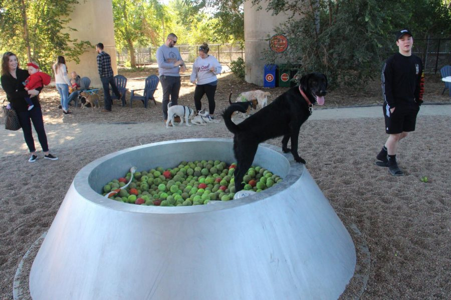 The pit of tennis balls available for dogs to play with.